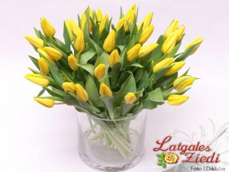 Tulpes 006