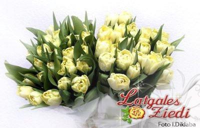 Tulpes 001