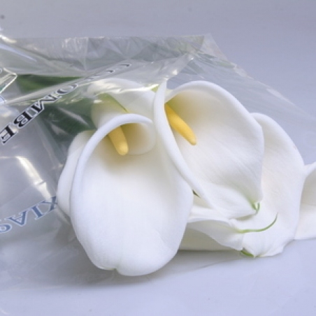 "Цветы - Калла ""Colombe"""