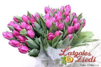 Tulpes 003